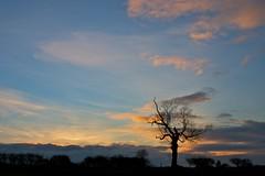 last of the sun (peet-astn) Tags: sunset sky tree tramonto cielo albero