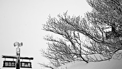 Guidepost in the snow (tai_nkm) Tags: winter snow tree japan lumix landscapes mie guidepost gf2
