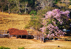 Homelandscape (osvaldoeaf) Tags: flowers brazil house tree nature brasil rural america fence landscape farm south cerrado prairie goinia homeland gois