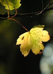 fly through leaf (Emily Garces) Tags: nature derbyshire peakdistrict goodlight wingerworth
