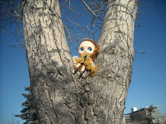 jasmine in a tree