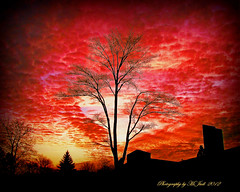 Tree Light (**Ms Judi**) Tags: trees light sunset orange tree church beautiful yellow midwest branch sundown branches blessing lovely magical enchanting treelight godsgift msjudi peshtigowisconsin judistevenson judippc photographybymsjudi