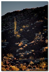 Lone Saguaro 3a (GlixPix) Tags: sunset arizona cactus art beautiful beauty cacti canon landscape interestingness interesting flora shadows desert dramatic highdesert americana lonely badlands saguaro drama sonoran quartzite sonorandesert desertview desertmountains landscapeportrait canon5dmkii glixpix kevindrenz kevinrenz kdrenz