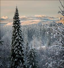 Leap Day Snow (TT_MAC) Tags: snow nature forest landscape campbellriver platinumheartaward bestcapturesaoi coppercloudsilvernsun elitegalleryaoi