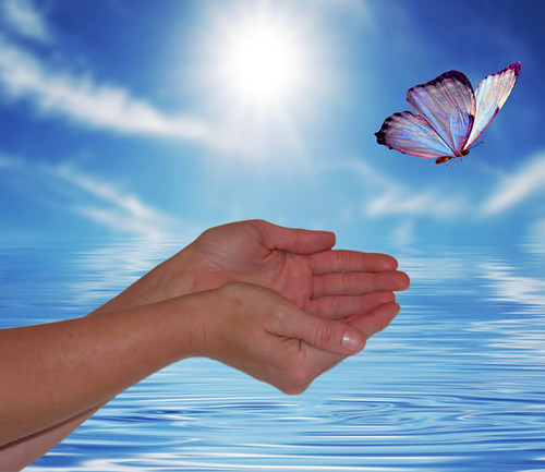 Butterfly flying free from cupped hands