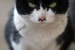 (*suika *) Tags: blur macro cat eyes outoffocus mygarden   straycat tamron90mm      nikond80    blurlover