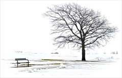 A bench and a tree (Salmando) Tags: winter snow tree bench 50mm nikon nikkor jyrki ais f12 kotka salmi alberoefoglia d7000 mygearandme mygearandmepremium mygearandmebronze mygearandmesilver mygearandmegold mygearandmeplatinum mygearandmediamond