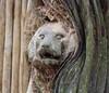 "Amersfoort Zoo <a style=""margin-left:10px; font-size:0.8em;"" href=""http://www.flickr.com/photos/78486882@N04/6997097746/"" target=""_blank"">@flickr</a>"