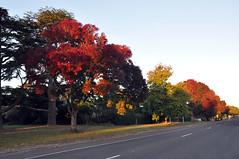 early morning in Ballan, Vic, Australia (Leone Fabre) Tags: autumn colour sunshine colours earlymorning australia victoria autumncolors ballan leonefabre regionalvictoria april2012