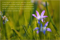 Early will I seek thee (listentothemountains) Tags: inspiration beautiful christ god framed jesus bible inspirational passage verse psalm encouragement wordofgod kjv encouraging psalm63