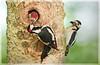 www.durmaplay.com_oyun_wallpaper_76094.jpg (http://www.durmaplay.com) Tags: holland bird nature netherlands animal wildlife nederland thenetherlands natuur dier vogel moeras natuurreservaat nationalparkdebiesbosch hvhe1 hennievanheerden krammersluizen wwwdurmaplaycom