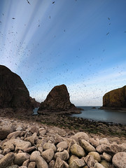 Multiple (1M056062 E-M1 7mm iso200 f4 1_500s) (Mel Stephens) Tags: uk birds animals landscape visions coast scotland aberdeenshire olympus trail coastal pro modified gps buchan stacked omd em1 2016 imagemagick m43 q2 bullers 714mm mirrorless microfourthirds mzuiko 201605 20160505