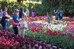 Tulip Fest (26 of 26) (evan.chakroff) Tags: flowers festival washington spring unitedstates tulips tulip april mountvernon tulipfestival mtvernon roozengaarde 2016