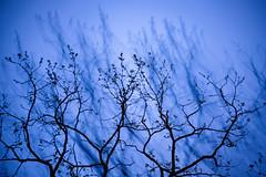 Ghost (lorenheinle) Tags: new blue light sky tree nature newjersey mood places jersey loren lorenheinle