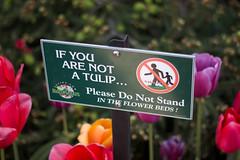 Tulip Fest (25 of 26) (evan.chakroff) Tags: flowers festival washington spring unitedstates tulips tulip april mountvernon tulipfestival mtvernon roozengaarde 2016