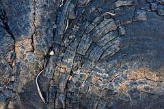 Dtail d'une coule de lave / Lava detail (frost242) Tags: detail flow lava run runion lave dtail volcan lavaflow coule ocanindien ledelarunion