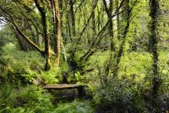 Sarela mxico (PacotePacote) Tags: bridge santiago verde green ro forest river landscape puente ponte galicia galiza bosque compostela ribera sarela