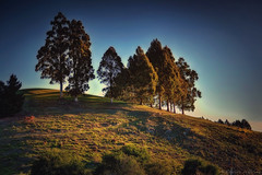 Hill dwellers (Kevin_Jeffries) Tags: blue light red sky brown sunlight plant color tree green nature colors outside outdoors interesting bush flickr day branch dusk branches hill natur highlights shade environment discovery idyllic