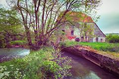 Moulin d'Hzecques (CrOS Photographie) Tags: france mill abandoned nature water landscape moulin eau decay paysage lys abandonn rurex hzecques