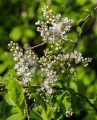 4Y1A7928 (Ninara) Tags: sea summer flower nature finland island helsinki wildflower kes tuomi vallisaari historiakohde sotilassaari