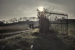 play Misty for me (bas.handels) Tags: wood sky sun mist netherlands maastricht nederland lucht bos zon limburg