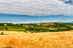 Monferrato (Italy): landscape (clodio61) Tags: blue summer sky italy panorama house mountain plant alps color tree green nature field rural landscape photography vineyard italian europe day outdoor country hill scenic meadow vine sunny valley land agriculture typical piedmont monferrato