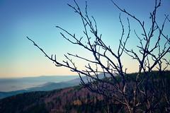 View from Schauinsland V (ericgrhs) Tags: autumn sky mountain tree fall herbst freiburg baden schwarzwald blackforest schauinsland badenwrttemberg