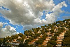 Olivas frescas (Carhove) Tags: winter sky espaa sol azul clouds landscape spain nieve paisaje andalucia sierra cielo nubes invierno jaen aceitunas olivas olivos olivar sierramgina oltusfotos mygearandme mygearandmepremium rememberthatmomentlevel1