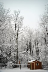 Winter morning (blmiers2) Tags: morning trees winter white snow cold tree nature nikon pristine d3100 blm18 blmiers2