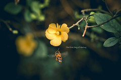 (jim_213) Tags: flower sony bee a55 sal1680z