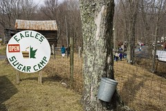 Entrance to Eagle's Sugar Camp, maple sugar maker. (dkjphoto) Tags: usa tree america virginia maple unitedstates syrup mountvernon highlandcounty dennisjohnson eaglessugarcamp wwwdenniskjohnsoncom
