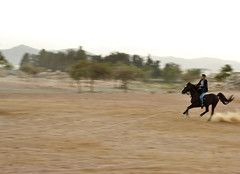 (Ayman AL-Sayyali) Tags: horse motion mare fast mounted saudi arabia imaging ksa horseman  merely  taif