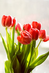 le printemps (Helene Parfait) Tags: flowers light red love window spring tulips 9 present greenleafs daning