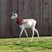 National Zoo_2012 03 04_0163