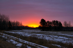 Snowless Winter Sunrise (Doug Wallick) Tags: county trees sky brown snow minnesota pine sunrise overcast grand casino lack lightroom hinckley a55 explored highway48 magicalskies mygearandme mygearandmepremium mygearandmebronze
