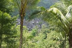 Indonesie 2011-1019-065334 (Gejepewe) Tags: kampungnaga