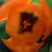 Orange Bokeh