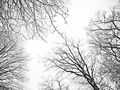 one snowing day III (Georgios Karamanis) Tags: trees winter sky bw white snow black sweden uppsala 4s iphone karamanis
