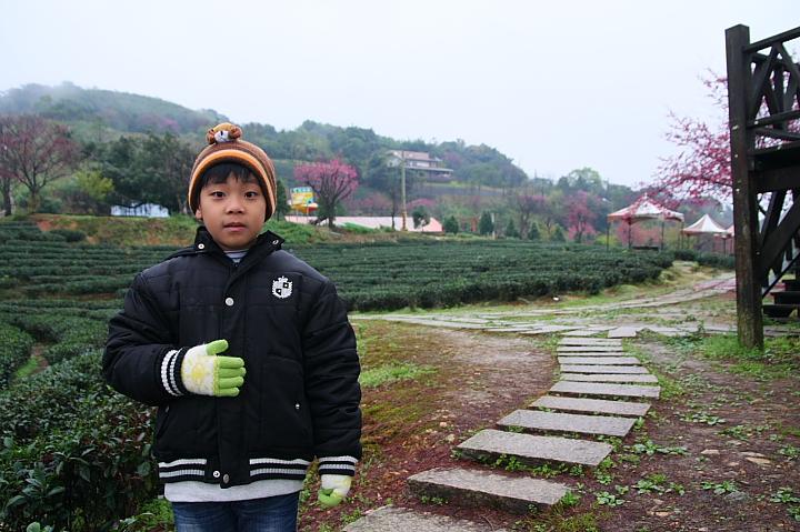玉蘭茶園櫻花0016