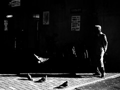 bird (Takeshi Garcia) Tags: street light shadow urban blackandwhite bw white black streets bird monochrome birds japan dark tokyo fly ueno candid streetphotography sp  fujifilm pointandshoot  x10 streetphotographer sophiehowarth thedefiningtouch deftouch takeshigarcia