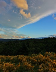 (nikstopsack) Tags: trees sunset panorama green yellow clouds oregon canon woods cascades mthood 1855 postcanyon oregonsunset northwestsunset southerncascades t2i northernoregon oregonmountain mthoodsunset hoodriversunset nikstopsackphotography nikstopsack