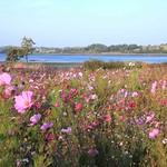Jachère fleurie à Plounez