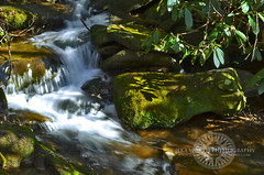 Mossy cascade in mountain stream. Great Smoky Mountains National Park, Tennessee, Appalachian, USA (Jeka World Photography) Tags: longexposure travel usa mountain plant motion detail green tourism nature wet water colors beauty horizontal closeup loving forest landscape photography waterfall nationalpark moss spring topf50 stream view time tennessee smoke small north smooth tranquility nopeople clean falling american fallen simplicity ethereal land backgrounds grotto environment flowing geology aquatic appalachian transparent relaxation cascade abundance surrounding appalachia smokymountains scenics freshness ecosystem greatsmokymountains elegance purity vibrantcolor vitality traveldestinations colorimage fragility urgency deciduoustree extremeterrain physicalgeography lushfoliage jekaworldphotography jeffrosephotography kalitharosephotography