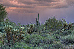 Spectral (dbushue) Tags: arizona cactus sky southwest colorful desert stormy eerie ghostly 2012 spectral coth supershot naturesgarden mcdowellmountainregionalpark absolutelystunningscapes damniwishidtakenthat coth5 photocontesttnc12 dailynaturetnc12