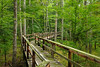 Big Hill Pond State Park (bhophotos) Tags: statepark trees usa nature landscape geotagged nikon tennessee trail swamp boardwalk dismalswamp d80 2470mmf28g bighillpond bruceoakley bighiilpondstatepark