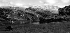 Lago Enol (J.M. Carballal) Tags: asturias lagos enol covadonga carballal