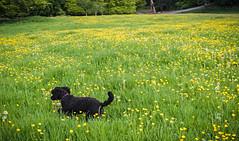 Shadow plays in a meadow II - LR6-5161582-web (David Norfolk) Tags: uk england unitedkingdom olympus gloucestershire westonbirt gb epl7