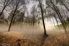 Micheldever Woods [EXPLORED] (trevager) Tags: trees mist woods walk micheldever brightpixphotography samyang75mmfisheye copyrighttrevorager lightroomcc