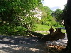 IMGP2918 Big tree branch across street (shutterbroke) Tags: street tree big branch pentax optio across ws80 shutterbroke
