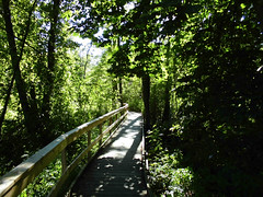 Kongo i Alingss (Charly Hund) Tags: wood trees summer green nature sweden path